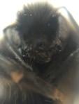 Bee afraid, bee very afraid