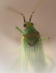 50 Shades of Green(fly)